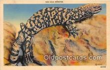 yan040009 - Gila Monster Postcard Post Card