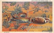 yan040017 - Rattle Snake, Rabbit Postcard Post Card