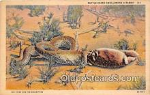 yan040022 - Rattle Snake, Rabbit Postcard Post Card