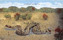 yan040024 - Northern United States Lonesome Rattler Postcard Post Card
