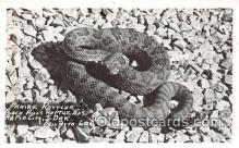 Praire Rattler, Real Photo