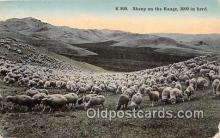 yan050006 - Sheep On The Range Postcard Post Card