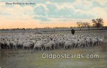 yan050010 - West Sheep Herding Postcard Post Card