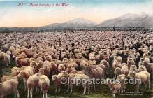 yan050012 - West Sheep Industry Postcard Post Card