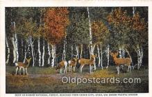 yan060004 - Cedar City, Utah, USA Deer, Kaibab National Forest Postcard Post Card
