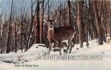 yan060015 - Maine, USA Maine Deer Postcard Post Card