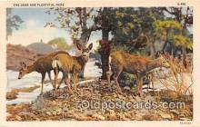 yan060029 - Deer Postcard Post Card