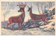 yan060033 - Whitetail Deer, Buck & Doe Postcard Post Card