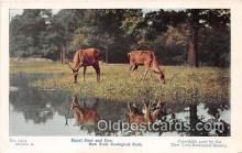 yan060043 - New York Zoological Park, USA Maral Deer & Doe Postcard Post Card