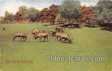 yan060046 - New York Zoological Park, USA Elk Herd Postcard Post Card