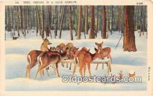 yan060048 - Deer Postcard Post Card