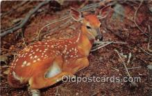 yan060051 - Fawn Postcard Post Card