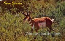 yan060053 - Open Season, Antelope Postcard Post Card