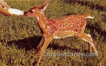 yan060059 - Young Fawn Postcard Post Card