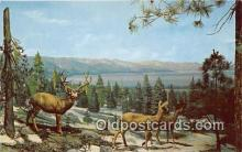 yan060060 - Lake Tahoe Mule Deer Postcard Post Card