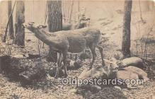 yan060076 - Chicago, IL, USA Virginia Deer, Field Museum of Natural History Postcard Post Card