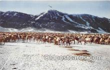 yan060080 - Jackson Hole, Wyoming, USA National Elk Refuge Postcard Post Card