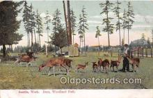 yan060086 - Seattle, Washington, USA Deer, Woodland Park Postcard Post Card