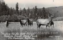 yan060090 - Prairie Creek State Park Real Photo - Native Wild Elk Range Postcard Post Card