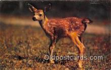 yan060091 - Catskill Mountains, NY, USA Little Deer Postcard Post Card