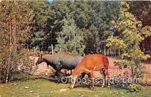 yan060093 - Catskill, NY, USA Blue Buck, Catskill Game Farm Postcard Post Card