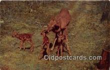yan060106 - Deer Triplets Postcard Post Card