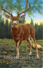 yan060118 - California, USA California Mule Deer Postcard Post Card