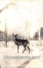 yan060120 - Ontowagon, Michigan, USA Real Photo - Deer in Winter Postcard Post Card