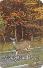 yan060135 - Adirondack Mountains, NY, USA Adirondack Doe Postcard Post Card