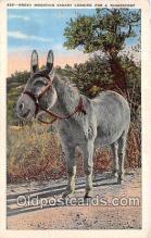 yan070001 - Rocky Mountain Canary Postcard Post Card