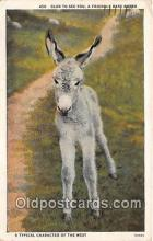 yan070002 - Baby Burro Postcard Post Card