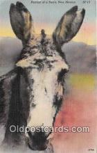 yan070003 - New Mexico, USA Burro Postcard Post Card