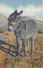 yan070008 - Rags Postcard Post Card