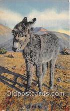yan070010 - Rags Postcard Post Card