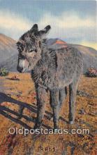 yan070029 - Rags Postcard Post Card