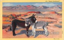 yan070048 - Desert Sweethearts Postcard Post Card