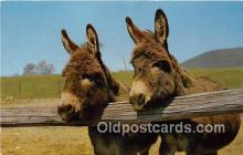 yan070052 - Pair of Sardenian Donkeys Postcard Post Card