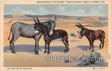 yan070055 - Burro Postcard Post Card