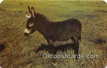 yan070061 - Baby Burro Postcard Post Card