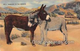 yan070064 - Romance in the Rockis Postcard Post Card