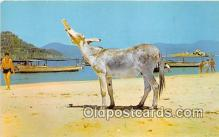 yan070065 - Gro, Mexico El Burro Borracho Postcard Post Card