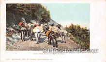 yan070086 - Mountain Road Burro Pack Train Postcard Post Card