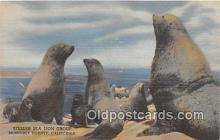 yan080001 - Monterey County, CA, USA Steller Sea Lion Group Postcard Post Card