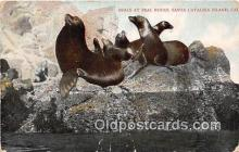 yan080005 - Santa Catalina Island, CA, USA Seals, Seal Rocks Postcard Post Card
