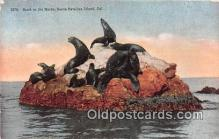 yan080009 - Santa Catalina Island, CA, USA Seals on the Rock Postcard Post Card