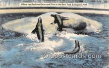 yan080015 - New York Zoological Park, USA Sealions Swim Postcard Post Card