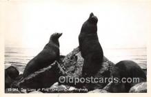 yan080017 - Oregon Coast Highway, USA Real Photo - Sea Lions Postcard Post Card