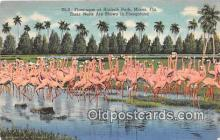 yan090013 - Miami, FL, USA Hialeah Park Postcard Post Card