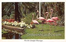 yan090019 - Graceful Flamingos Postcard Post Card