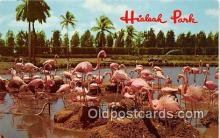 yan090020 - Hialeah, FL, USA Hialeah Park Postcard Post Card